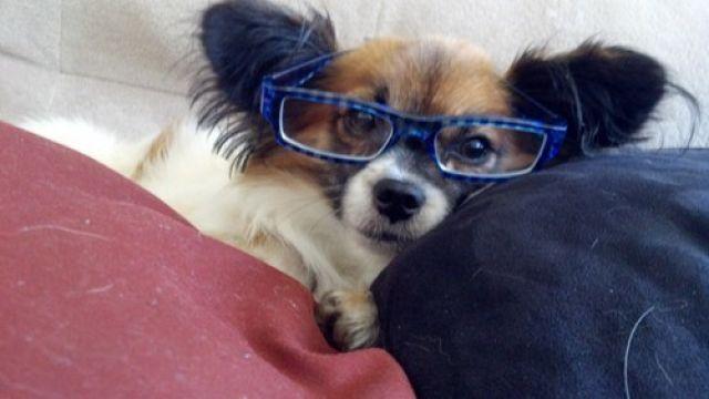 los-10-perros-ms-inteligentes